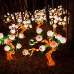 Lanterns On The Ground
