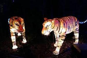 Tiger Silk Lantern Set